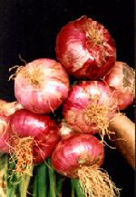 KP Onions